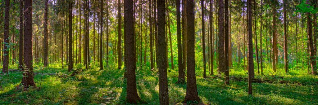 Областное государственное автономное учреждение «Лесхоз Иркутской области»